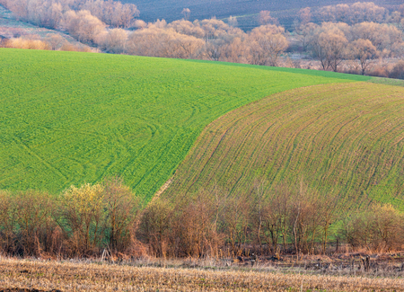 Spring morning rural country landscape with plowed agricultural fields on hills, trees and groves in valleys. Arable and growth farmlands in tender delicate sunrise light.