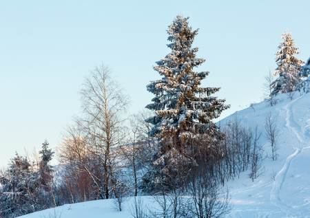 Early morning winter calm mountain landscape with beautiful frosting trees in mountains shadows and ski slope (Carpathian Mountains, Ukraine)