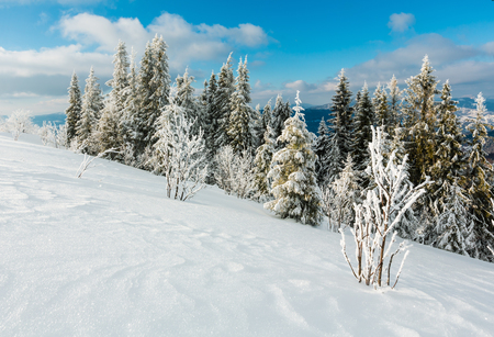 Winter calm mountain landscape with beautiful frosting trees and snowdrifts on slope (Carpathian Mountains, Ukraine) Imagens