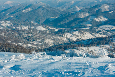 Morning winter calm mountain landscape with beautiful frosting trees and snowdrifts on slope (Carpathian Mountains, Ukraine)