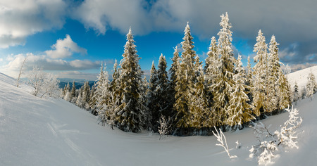 Winter calm mountain landscape with beautiful frosting trees and snowdrifts on slope (Carpathian Mountains, Ukraine) Stock fotó