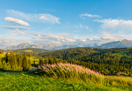 Summer evening mountain village outskirts with pink flowers in front and Tatra range behind (Gliczarow Gorny, Poland) Stockfoto