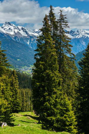 Summer Alps mountain landscape with fir forest on slope and snow covered rocky tops in far, Austria. Banco de Imagens