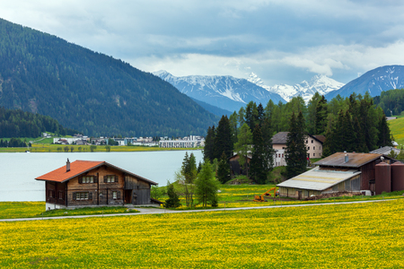 Summer country landscape with Davos Lake, town outskirts and dandelion meadow (Switzerland).