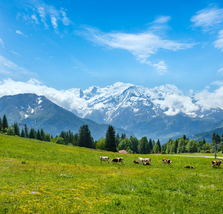 Herd cows on blossoming grassy glade and Mont Blanc mountain massif (Chamonix valley, France, view from Plaine Joux outskirts). Banque d'images - 120986542
