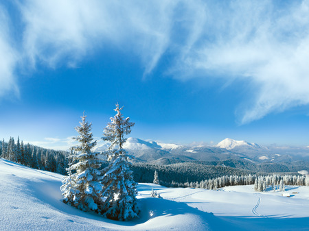 Morning winter calm mountain landscape with fir trees on slope (Goverla Mount, Carpathian Mountains, Ukraine).
