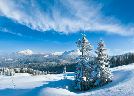 Morning winter calm mountain landscape with snowdrifts and fir trees on slope, Carpathian Mountains, Ukraine. Multi shots composite image.