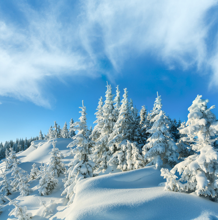 Snowdrifts on winter snow covered mountainside and fir trees on hill top and deep cloudy blue sky