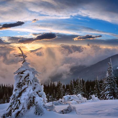 Tramonto inverno paesaggio di montagna con nuvole e abeti sul pendio, Carpazi, Ukraine Archivio Fotografico