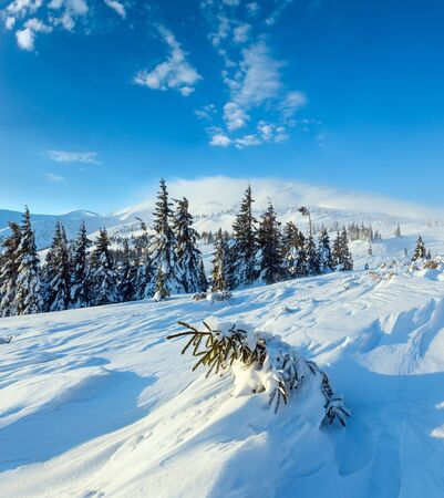 Small fir is inclined snow on slope in front. Morning winter mountain landscape with snowy trees, Carpathian.