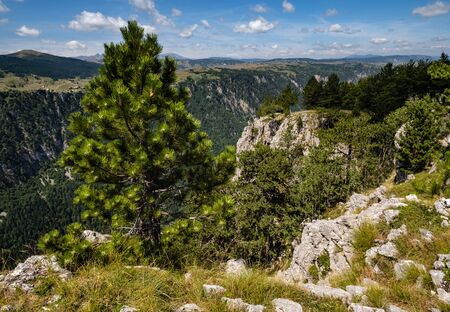 Picturesque summer mountain landscape of Tara Canyon in mountain Durmitor National Park, Montenegro, Europe, Balkans Dinaric Alps, UNESCO World Heritage.