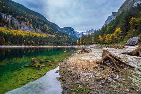 Tree stumps after deforestation near Gosauseen lake, Upper Austria. Colorful autumn alpine view of mountain lake with clear transparent water and reflections. Dachstein summit and glacier in far.