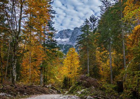 Peaceful autumn Alps mountain forest view. Near Gosauseen or Vorderer Gosausee lake, Upper Austria. Dachstein summit and glacier in far.