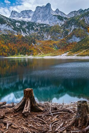 Tree stumps after deforestation near Hinterer Gosausee lake, Upper Austria. Colorful autumn alpine view of mountain lake with clear transparent water and reflections. Dachstein summit and glacier in far.