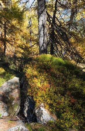 Peaceful sunny day autumn Alps mountain forest view. Reiteralm, Steiermark, Austria.