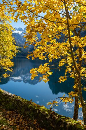 Sunny idyllic colorful autumn alpine view. Peaceful mountain lake with clear transparent water and reflections. Gosauseen or Vorderer Gosausee lake, Upper Austria. Dachstein summit and glacier in far.