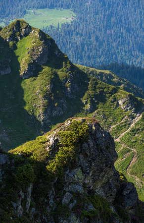 Summer mountain rocky ridge, rhododendron flowers and dwarf alpine pine bushes. Marmaros Pip Ivan Mountain, Carpathian, Ukraine.