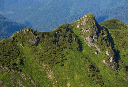 Summer mountain rocky ridge and dwarf alpine pine bushes. Marmaros Pip Ivan Mountain, Carpathian, Ukraine.