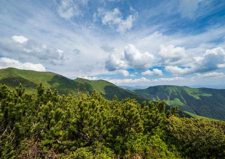 Summer mountain ridge and dwarf alpine pine bushes. Marmaros Pip Ivan Mountain, Carpathian, Ukraine. Zdjęcie Seryjne