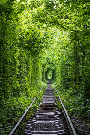 Love Tunnel (Railway section located in forest near Klevan, Ukraine. So named because before by this way girls from a nearby village and soldiers from a former military unit went on a dates).