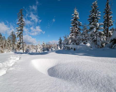 Alpine mountain snowy winter fir forest with snowdrifts Zdjęcie Seryjne