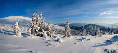 Sunrise mountain skiing freeride slopes and fir tree groves near alpine resort panorama.
