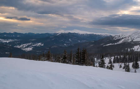 Picturesque winter windy and cloudy morning alps. Ukrainian Carpathians highest ridge Chornohora with peaks of Hoverla and Petros mountains. View from Svydovets ridge Dragobrat ski resort.
