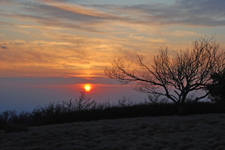 great smokies: Sunset on Gregory Bald in the Great Smoky Mountains