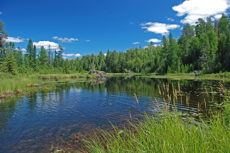 provincial: Marshland on Slate lake in Quetico Provincial Park