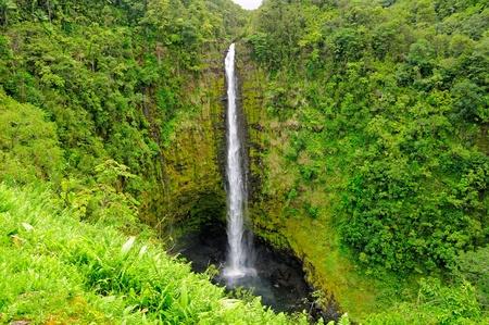 ハワイ島上・ k ・ アカカ滝や熱帯の成長 写真素材