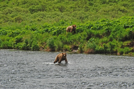 fraser river: This picture was taken on the Fraser river on Kodiak Island