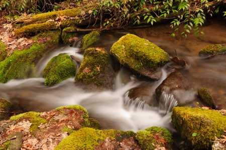Wolf Creek in the Great Smoky Mountains photo