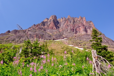 fireweed: Sinopah Mountain and Fireweed Stock Photo