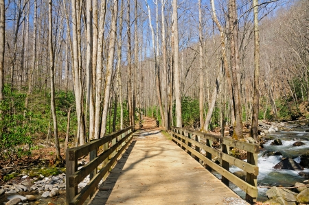 Bridge to explore the wilderness in the Great Smoky Mountains