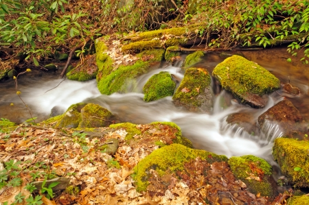 Wolf Creek in the Smoky Mountains in the Spring photo