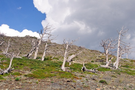 national scenic trail: Tree skeletons on the scenic point trail in Glacier National park Stock Photo