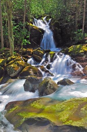smokies: Rat�n Creek Falls a lo largo del camino de Big Creek en el Smokies