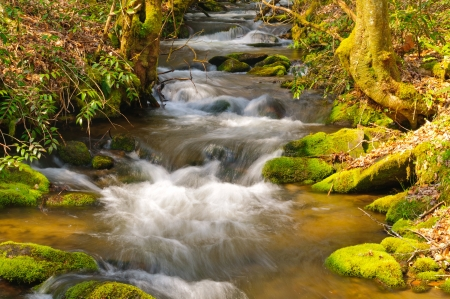 Mill Creek in the Smoky Mountains in Early Spring photo
