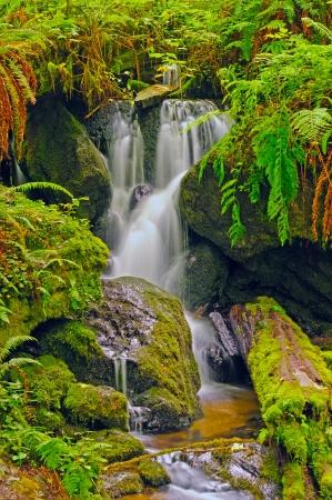 Trillium Falls in Redwood National Park in California Stock Photo