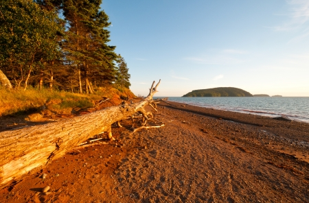 provincial: Log at Sunset in Five Islands Provincial Park Stock Photo