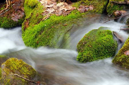 Spring vegetation and Wolf Creek in the Smoky Mountains photo