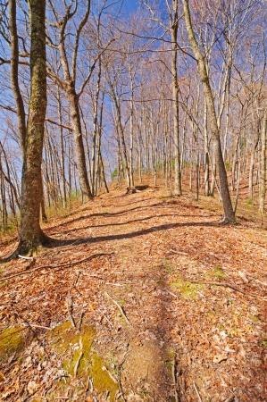 smokies: Al levantar el Camino Wolf Creek a principios de primavera en el Smokies