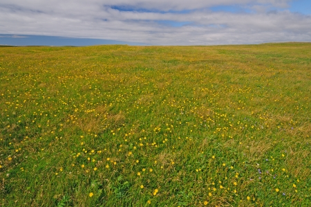 mary's: Meadow on Cape St Marys in Newfoundland