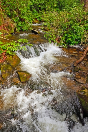 Wolf Creek in the Smoky Mountains photo