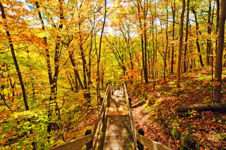 Ogle Lake Trail in Brown County State Forest in Indiana photo