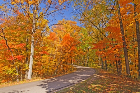 Road in Brown County State Park on a Fall Day photo