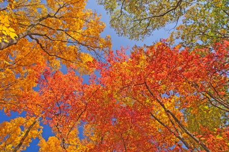 Fall Colors in Brown County State Park in Indiana photo