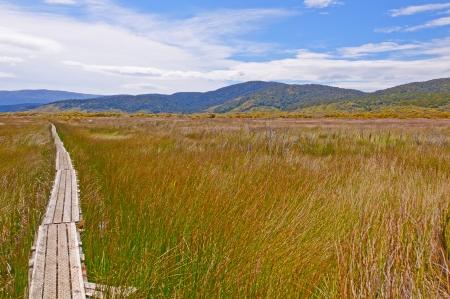 ニュージーランドのスチュアート島チョコレート沼地を通って行く北西回路トラック