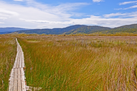 The North West Circuit Track going through the Chocolate Swamp on Stewart Island in New Zealand
