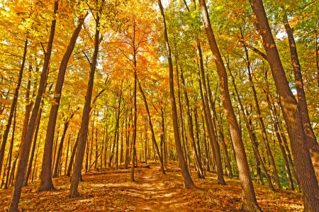 Trail in Brown County State Park during fall photo